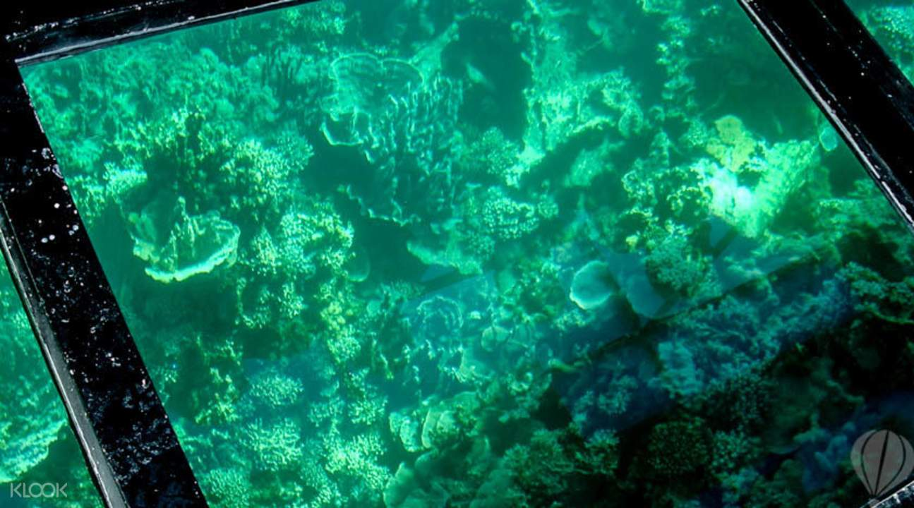 Look at the ocean on the glass bottom boat