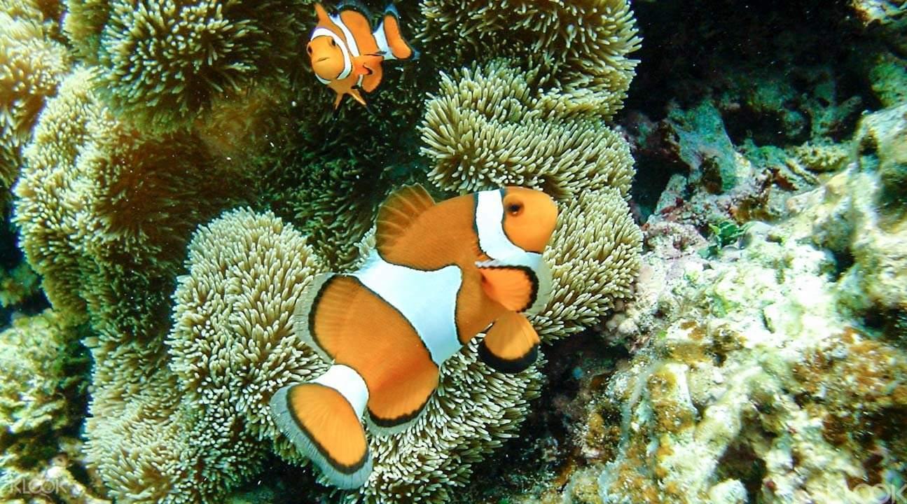 Corals at Kyafa Beach Okinawa
