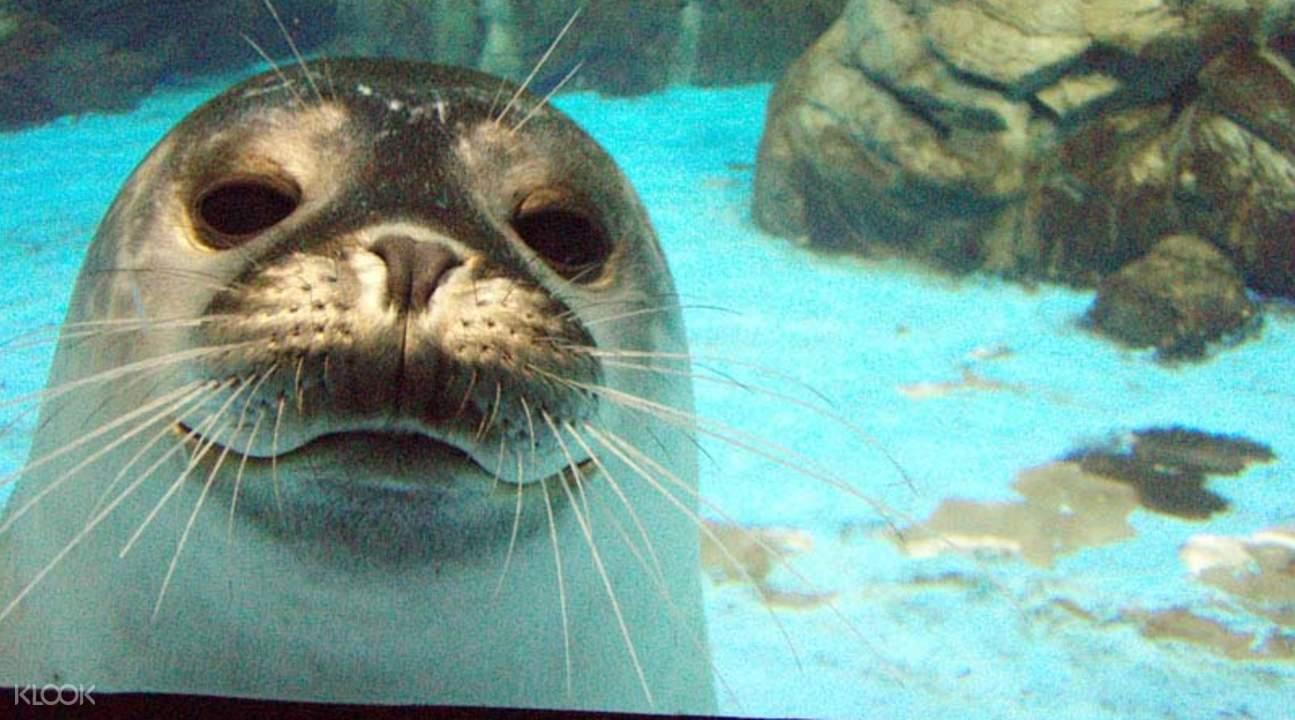 nmmba seal feeding