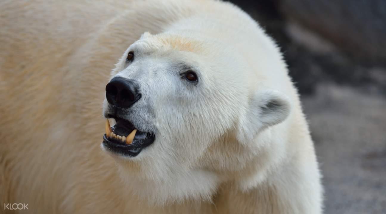 北海道动物园