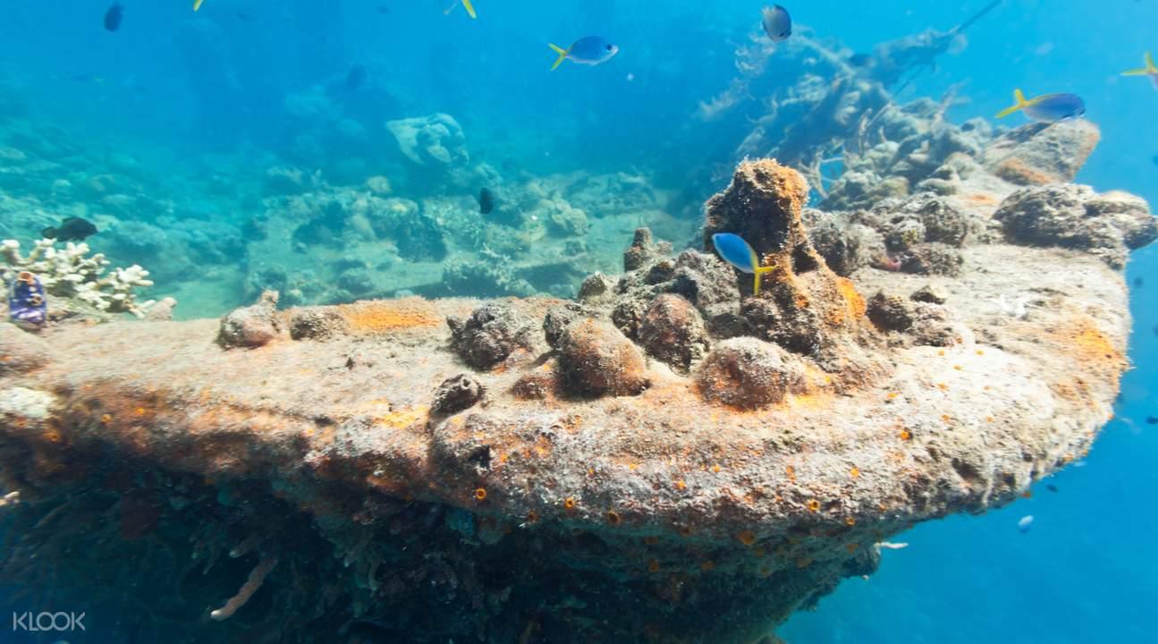 巴拉望海底潜水