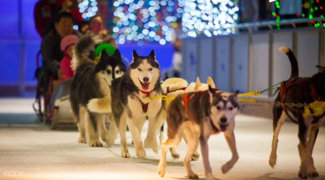 Onemount sled dog rides