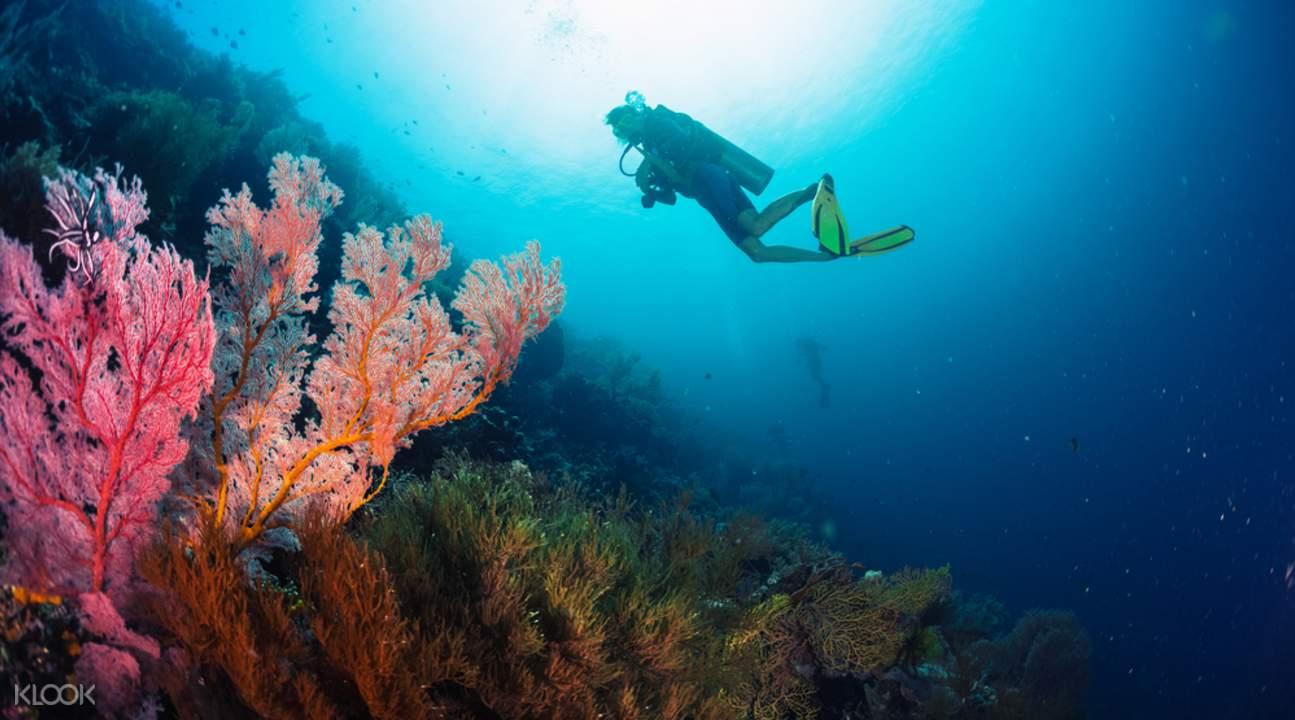 Sumilon Island snorkeling