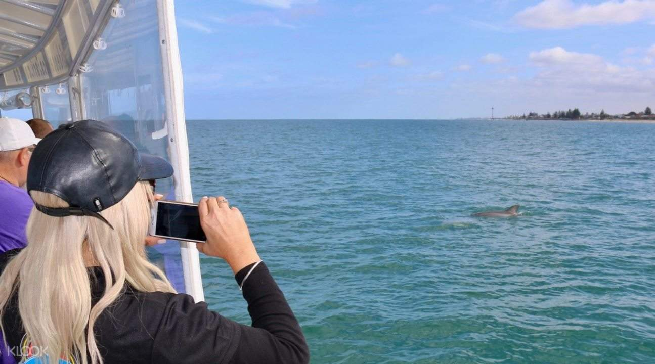 Woman taking picture of wild dolphins during ocean safari