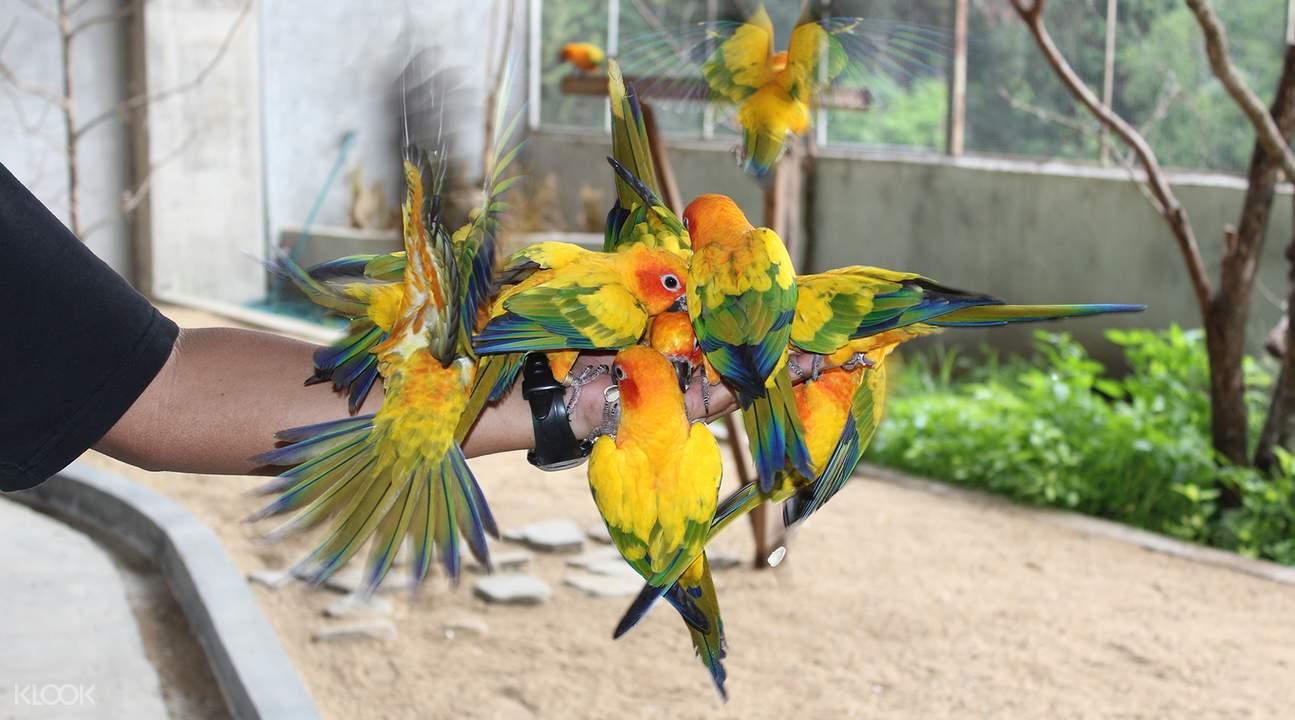 甘孟山城野生动物园鹦鹉