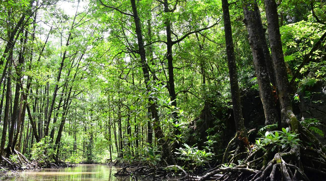 沙邦红树林