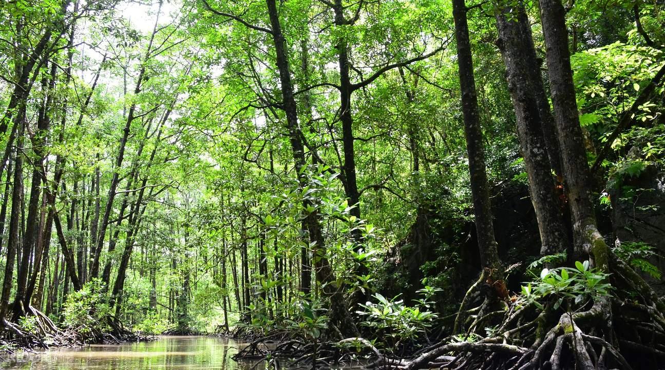 puerto princesa mangrove paddle tour