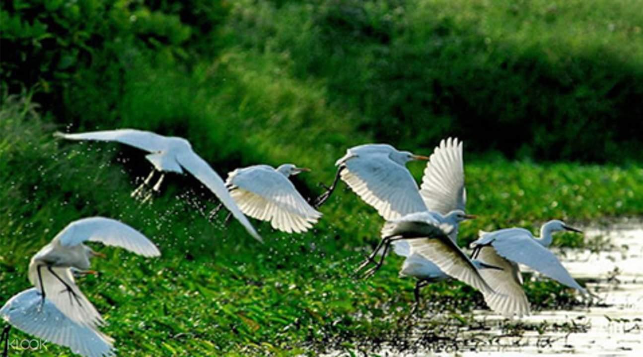 nansha wetland park guangzhou
