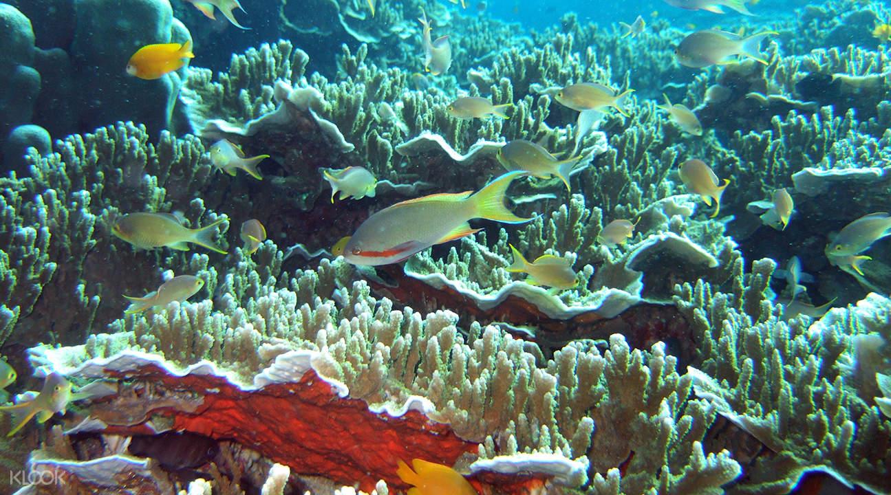 snorkeling at pescador island
