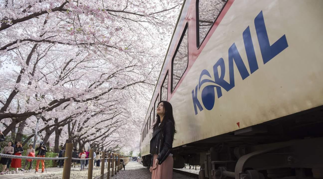 train to Korea cherry blossom festival