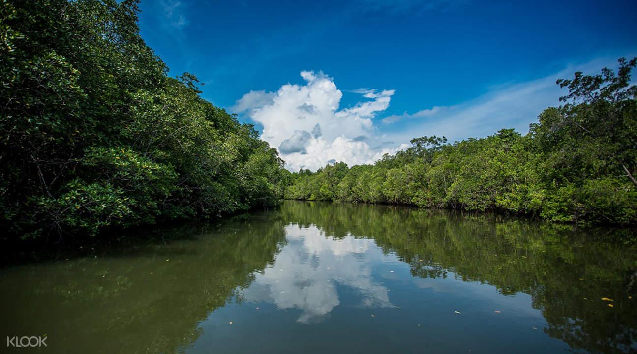 民丹紅樹林探索之旅