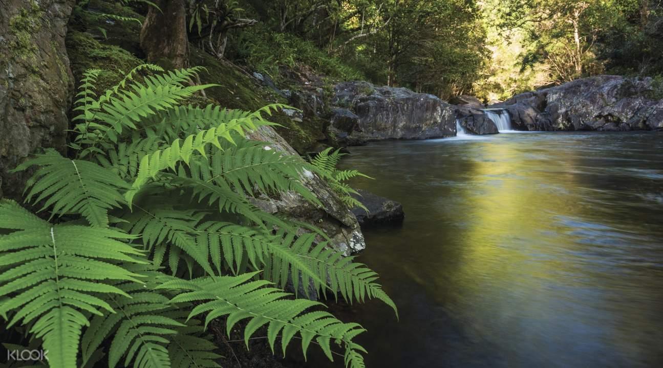 热带丛林溪降挑战