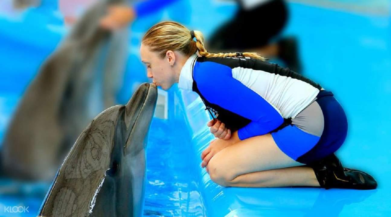 普吉島海豚秀