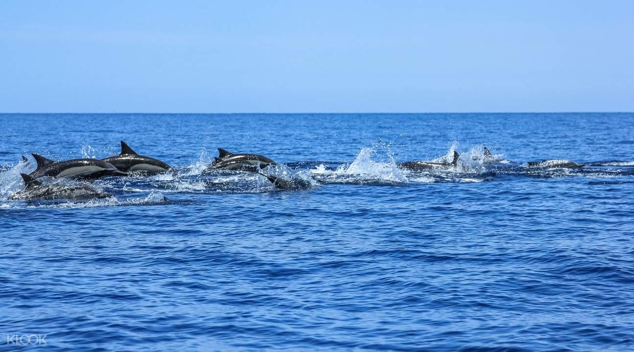 杰维斯湾生态巡游