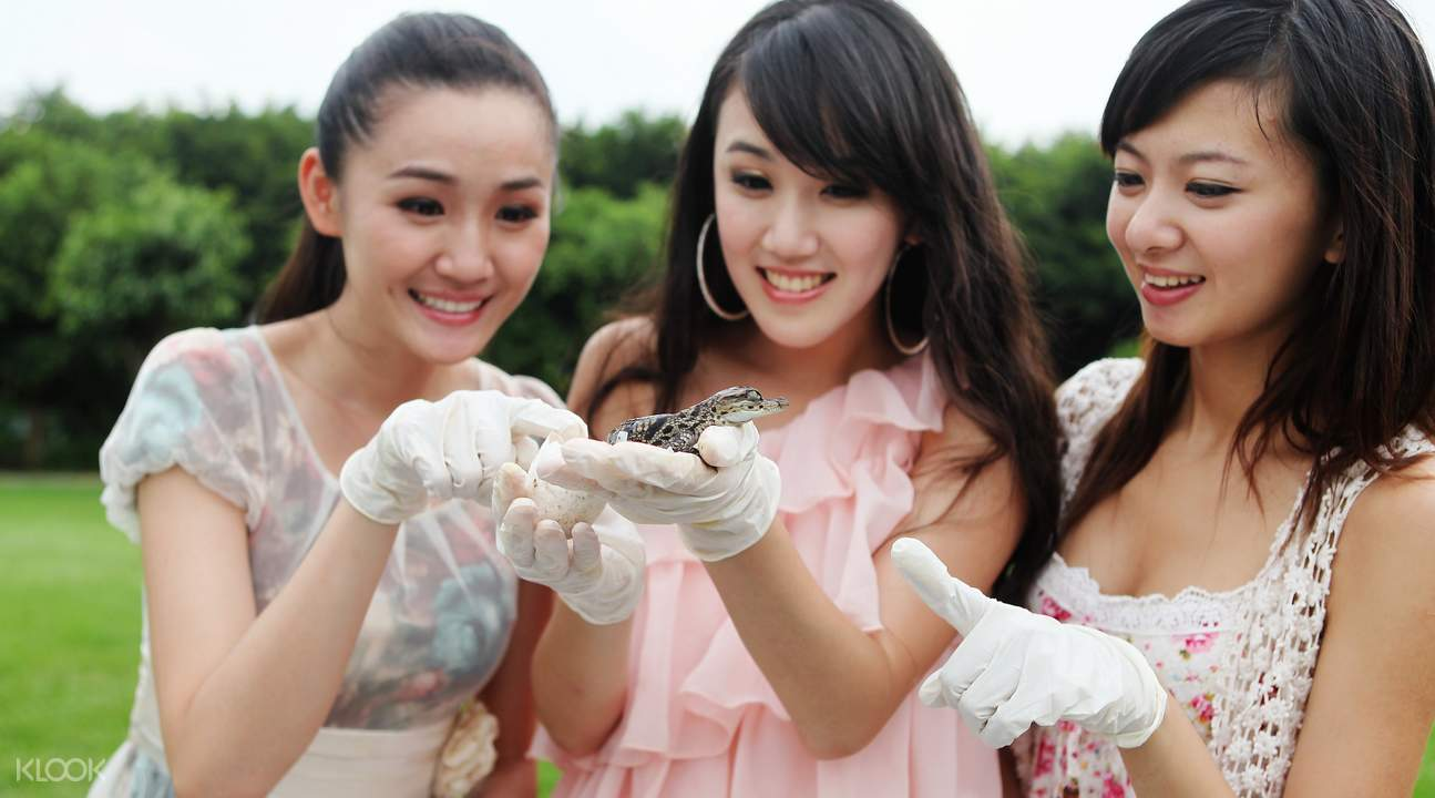 women holding a baby crocodile
