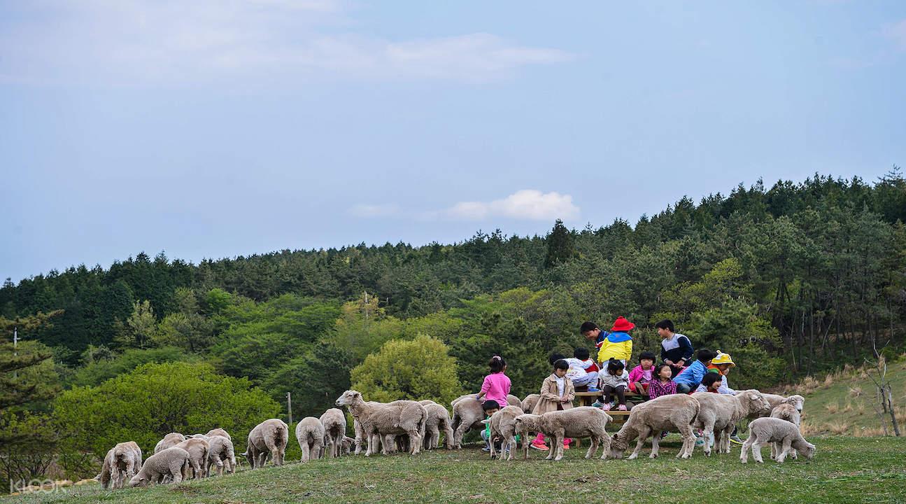 namhae tour, namhae visit korea, namhae from busan, namhae busan, busan to namhae island, yangmori sheep farm