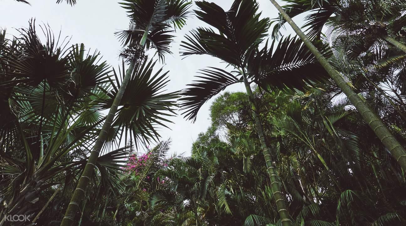 竹類植物園
