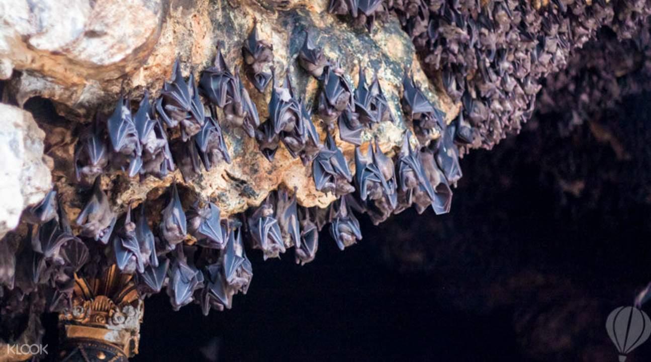 Bali bat caves