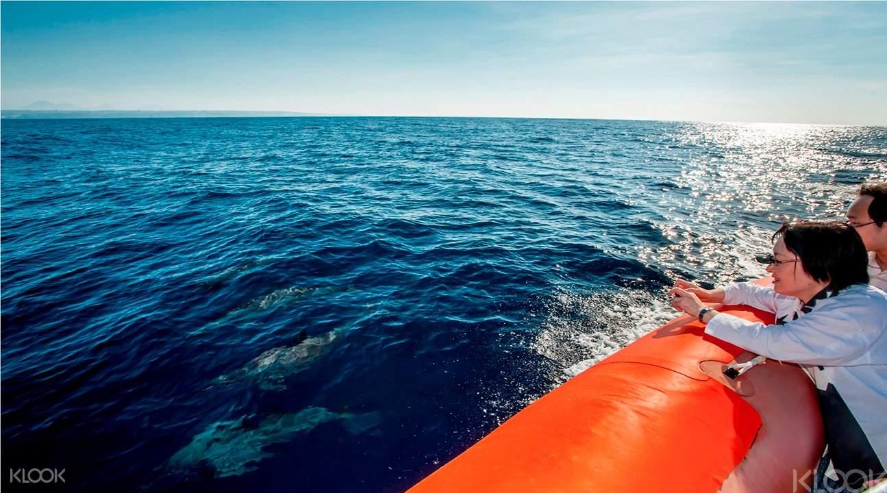 追踪海豚帆船遊