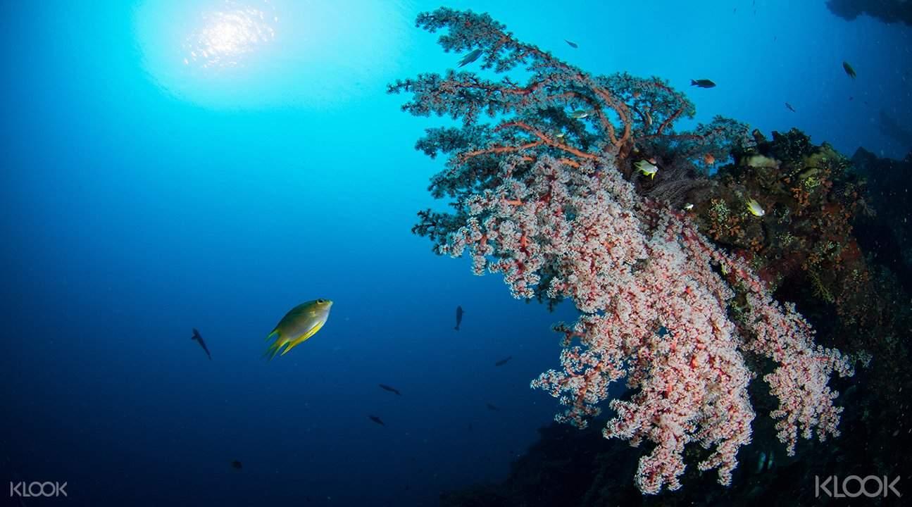 Tulamben Wreck Dive Day Trip