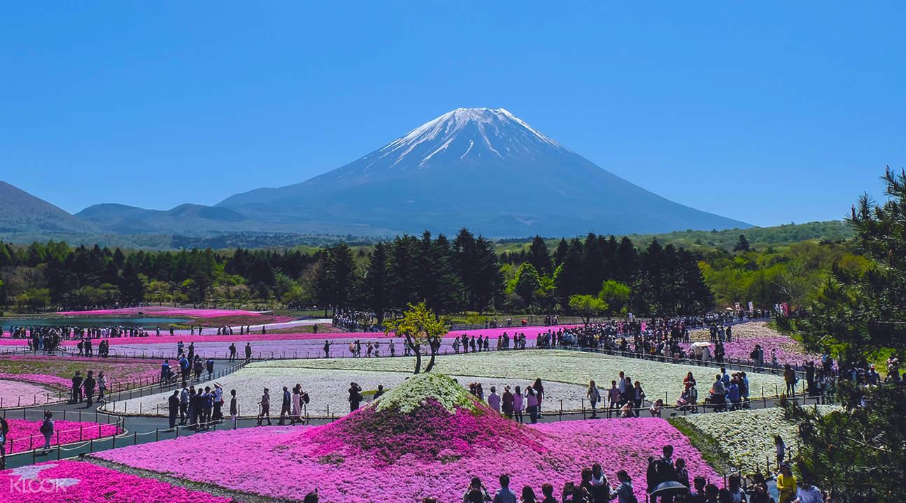 富士山芝樱祭