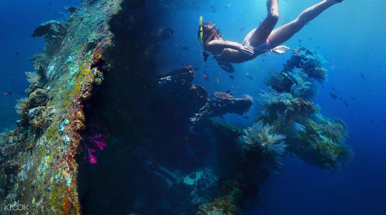 图兰奔潜水海洋生物