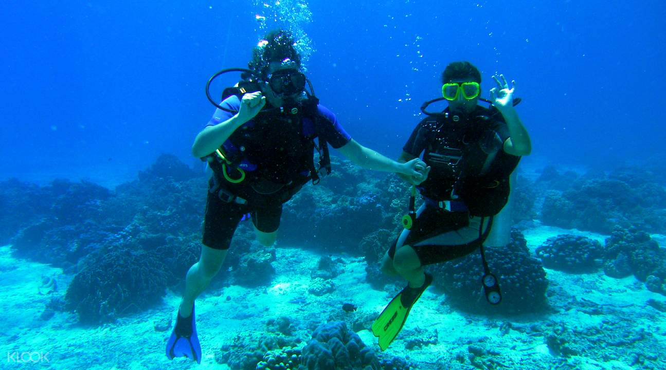 珊瑚岛一日游  潜水