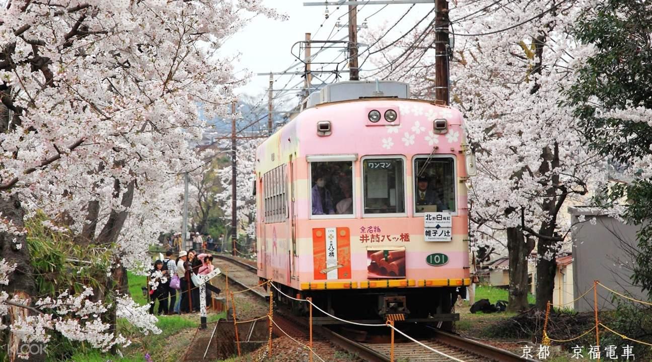 京都岚山赏樱
