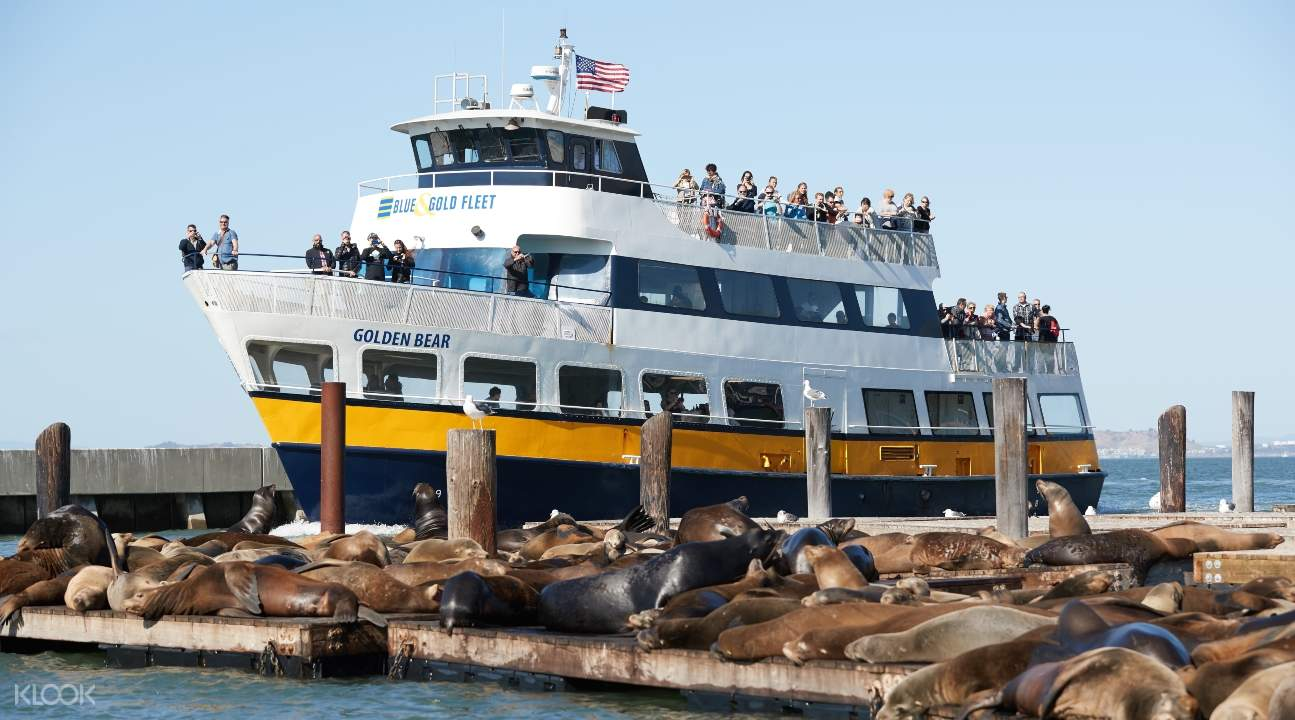 a cruise boat passing by the sea lions of San Francisco Bay