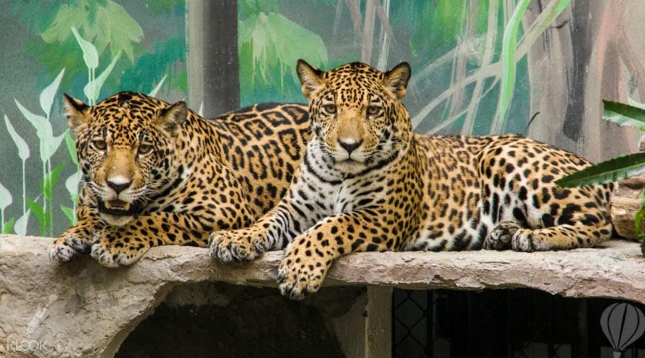 绿山野生动物园