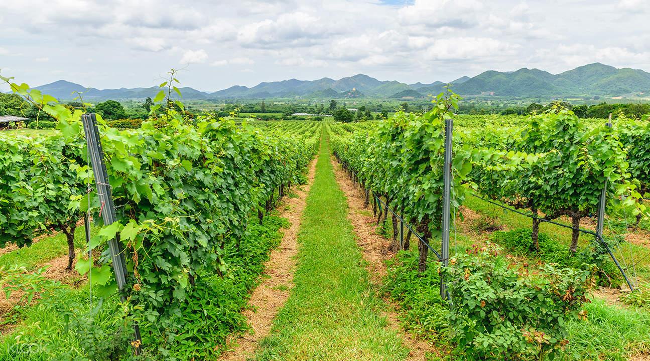 私人導覽 華欣半日游 & 葡萄酒莊園之旅