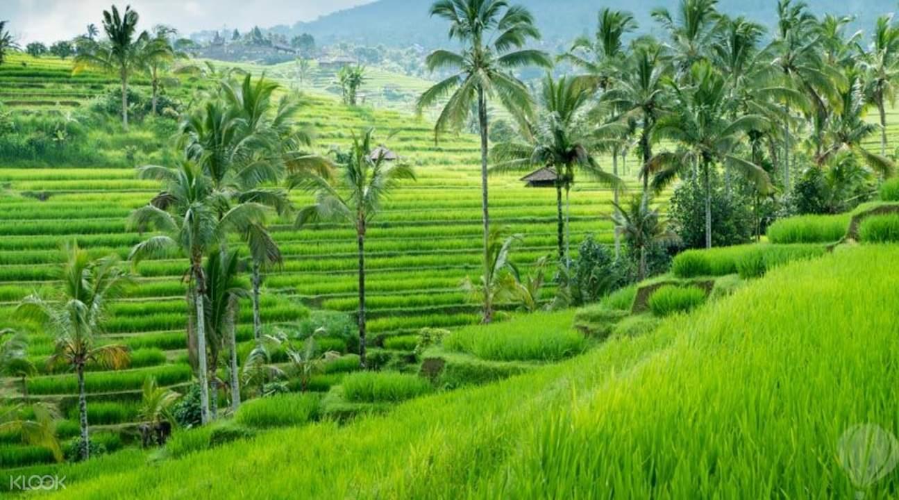 Bali Weather Forecast in addition to Bali Map Info Bali Tourist Destinations: 75 BALI ALTERNATIVE