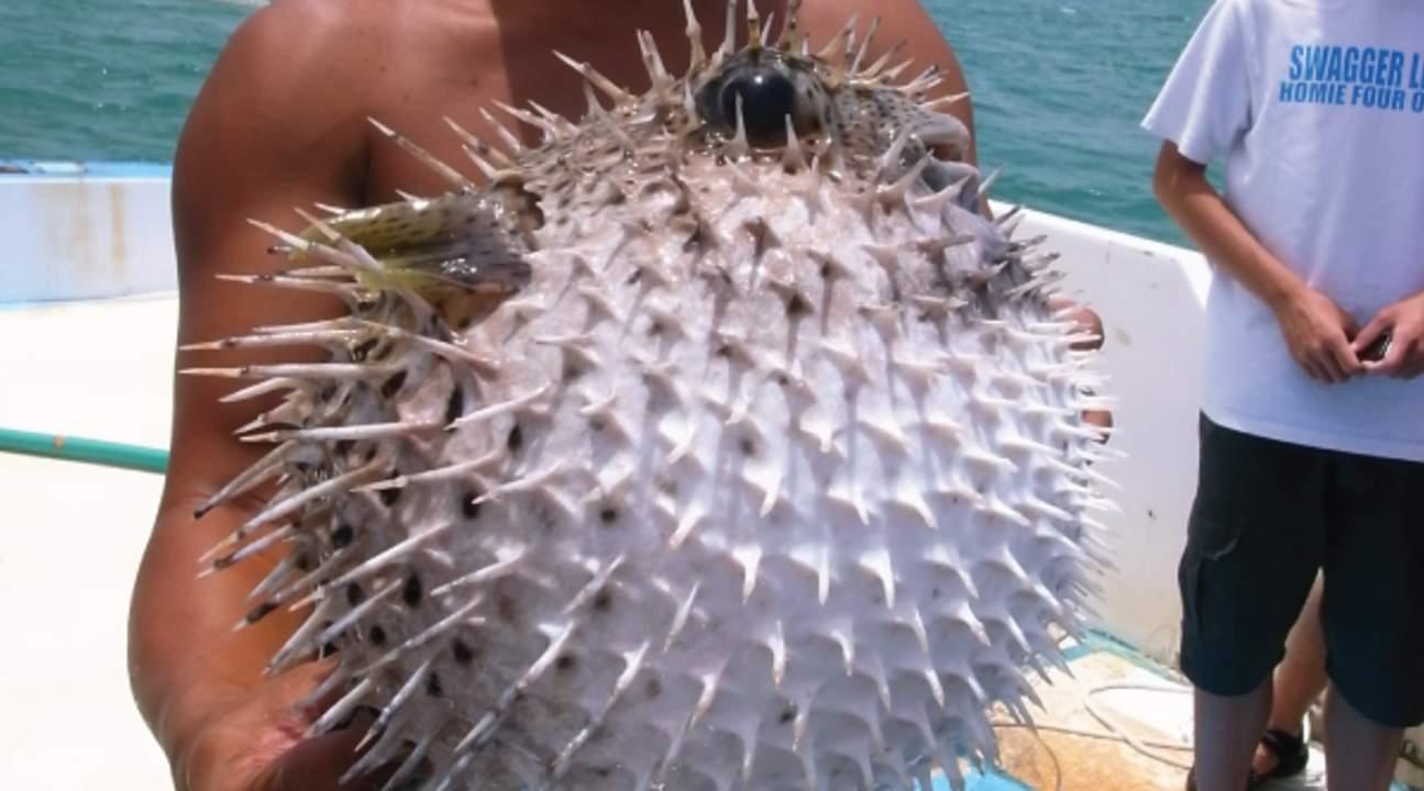 澎湖东海渔夫体验