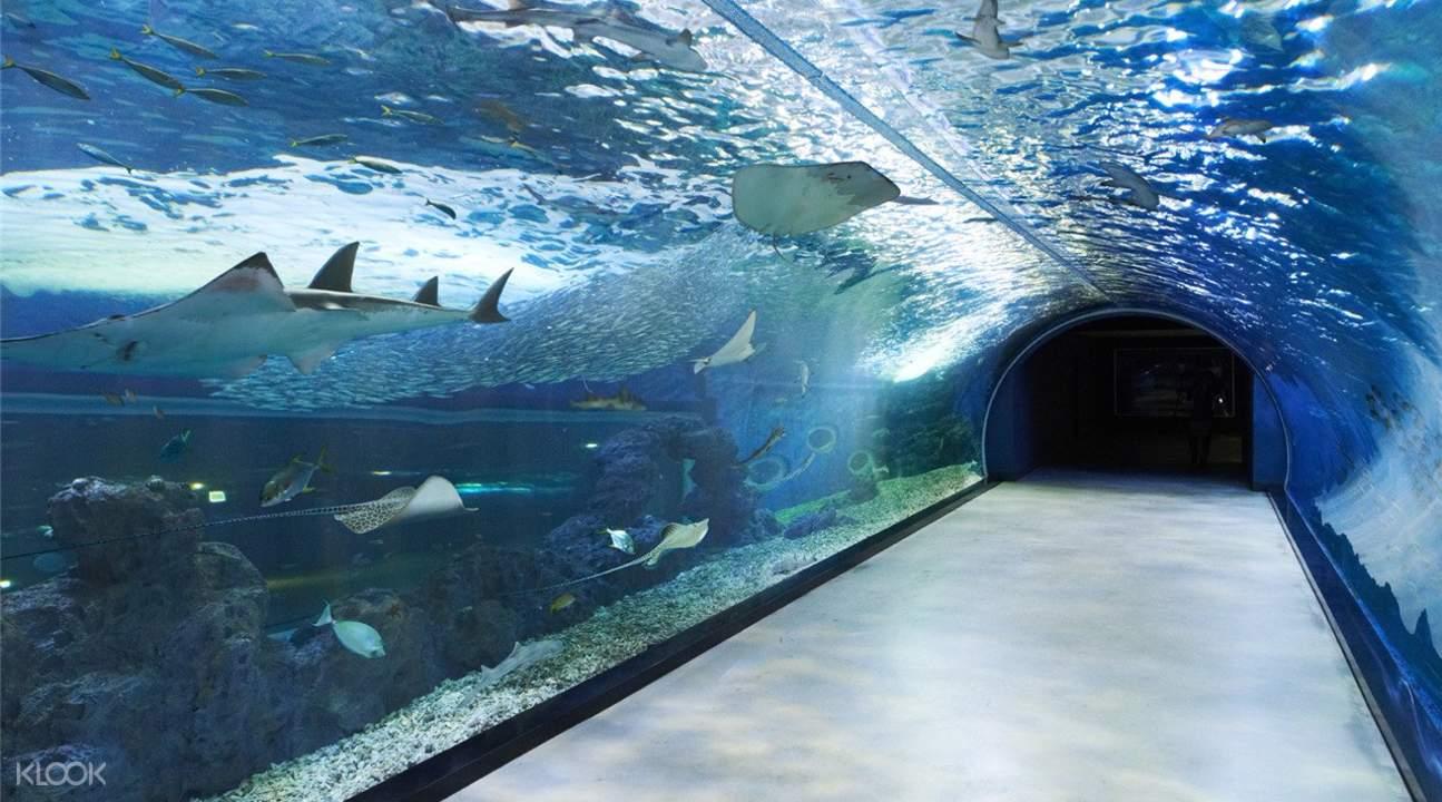 Đường hầm ngang qua thuỷ cung ở đảo Jeju