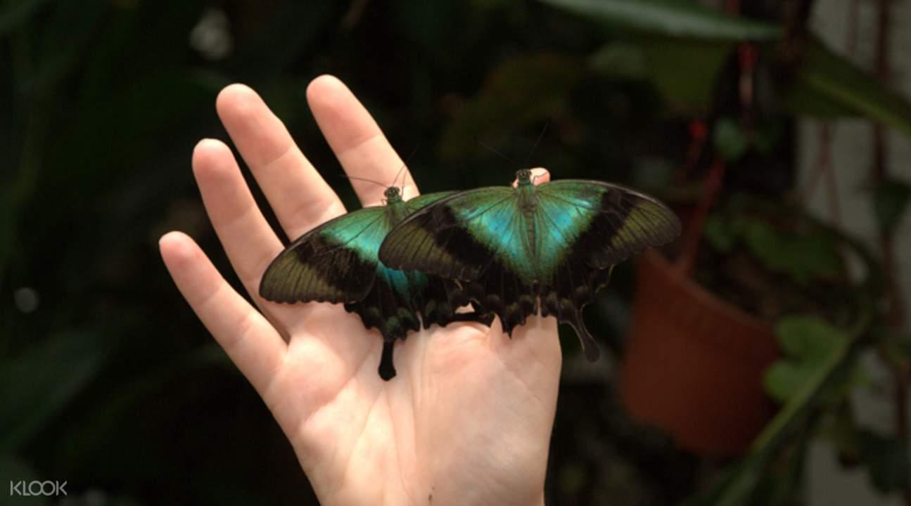 新加坡蝴蝶公园