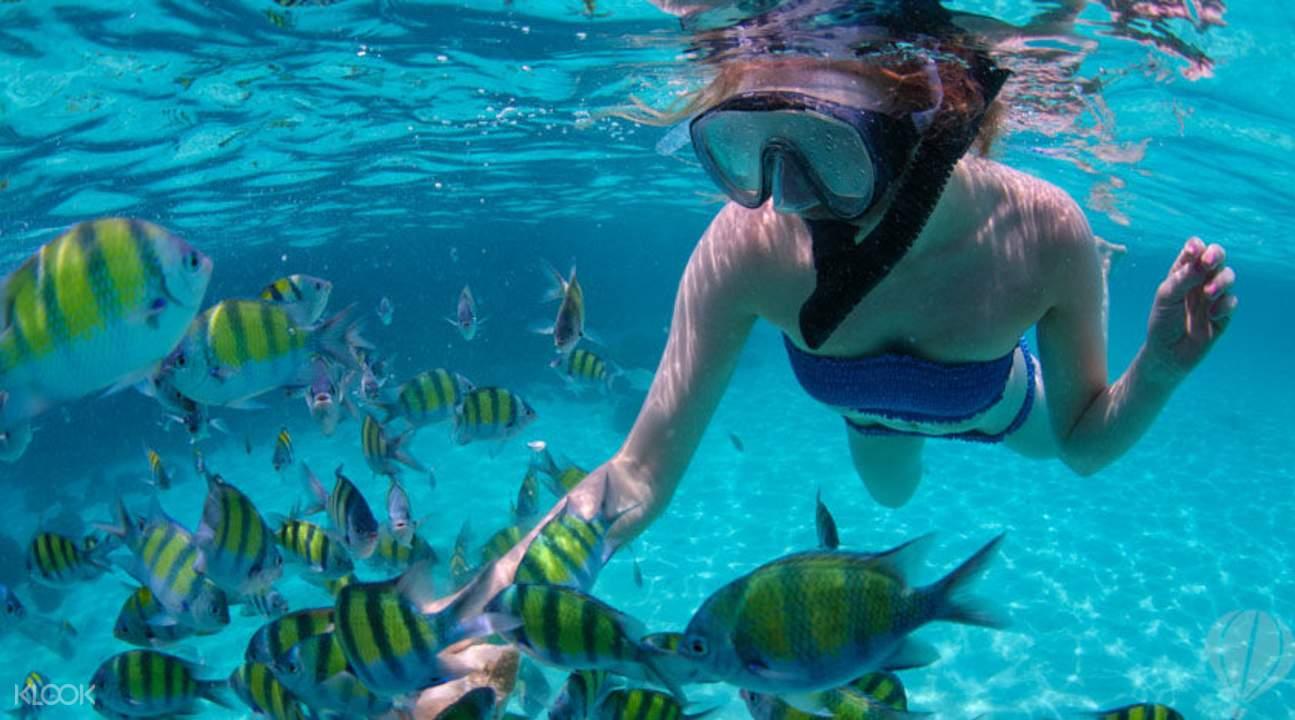 Island Snorkeling