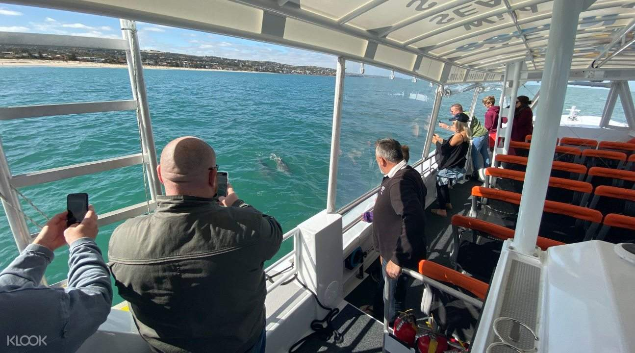 People on boat taking pictures of wild dolphins during ocean safari