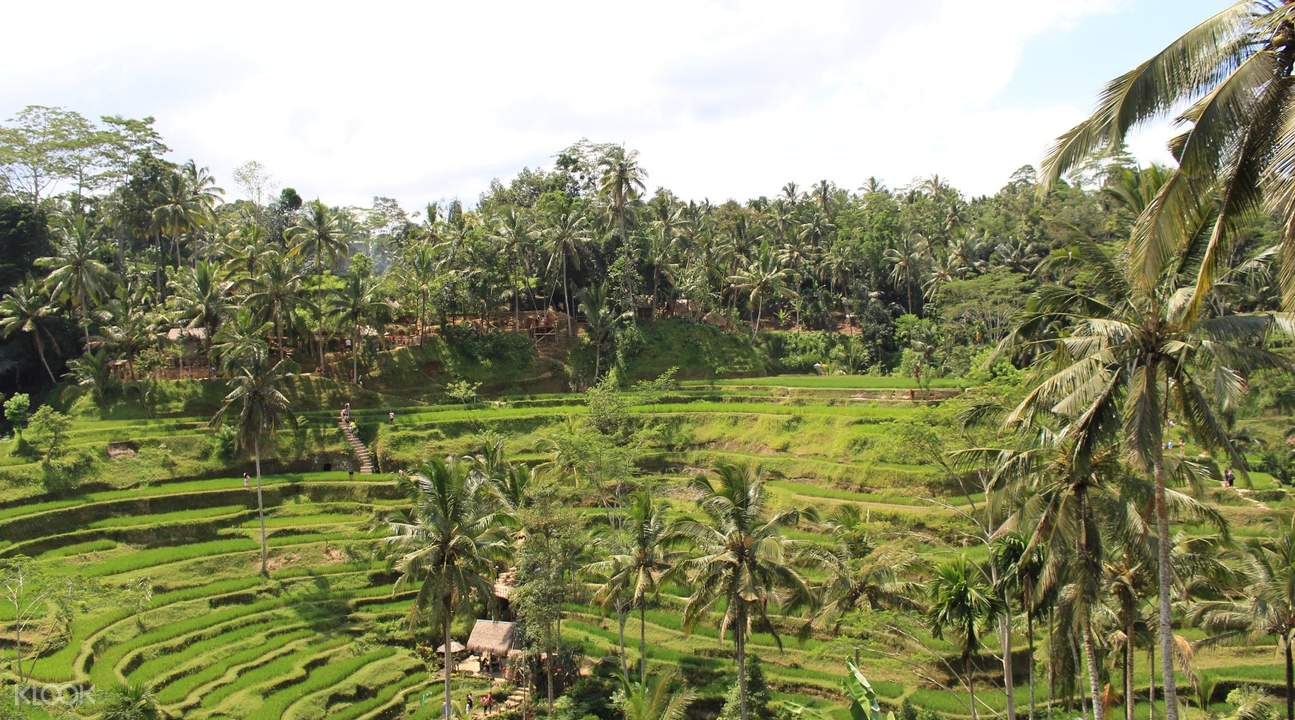 Tegelalang Rice Field