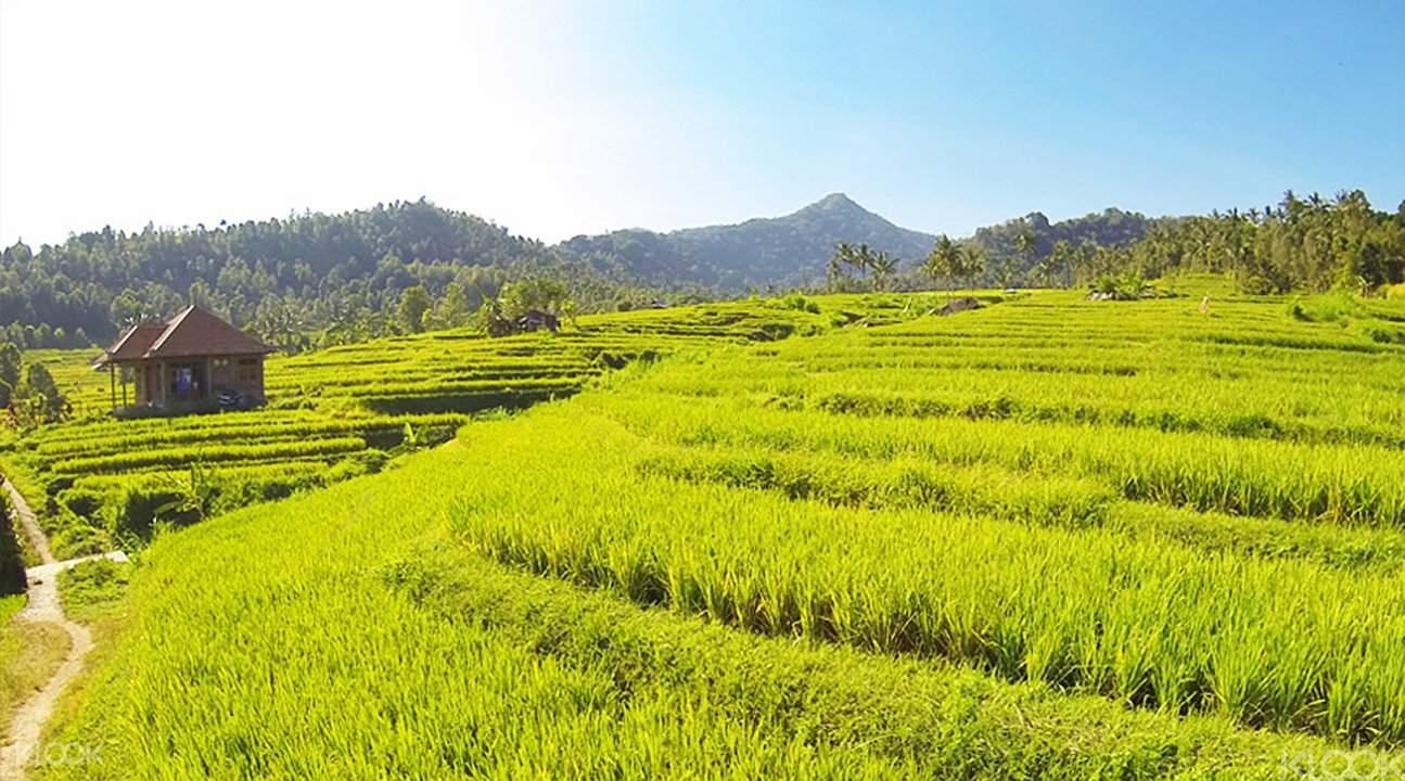 漫步在如詩的山野之間,綠野與山蔭齊舞