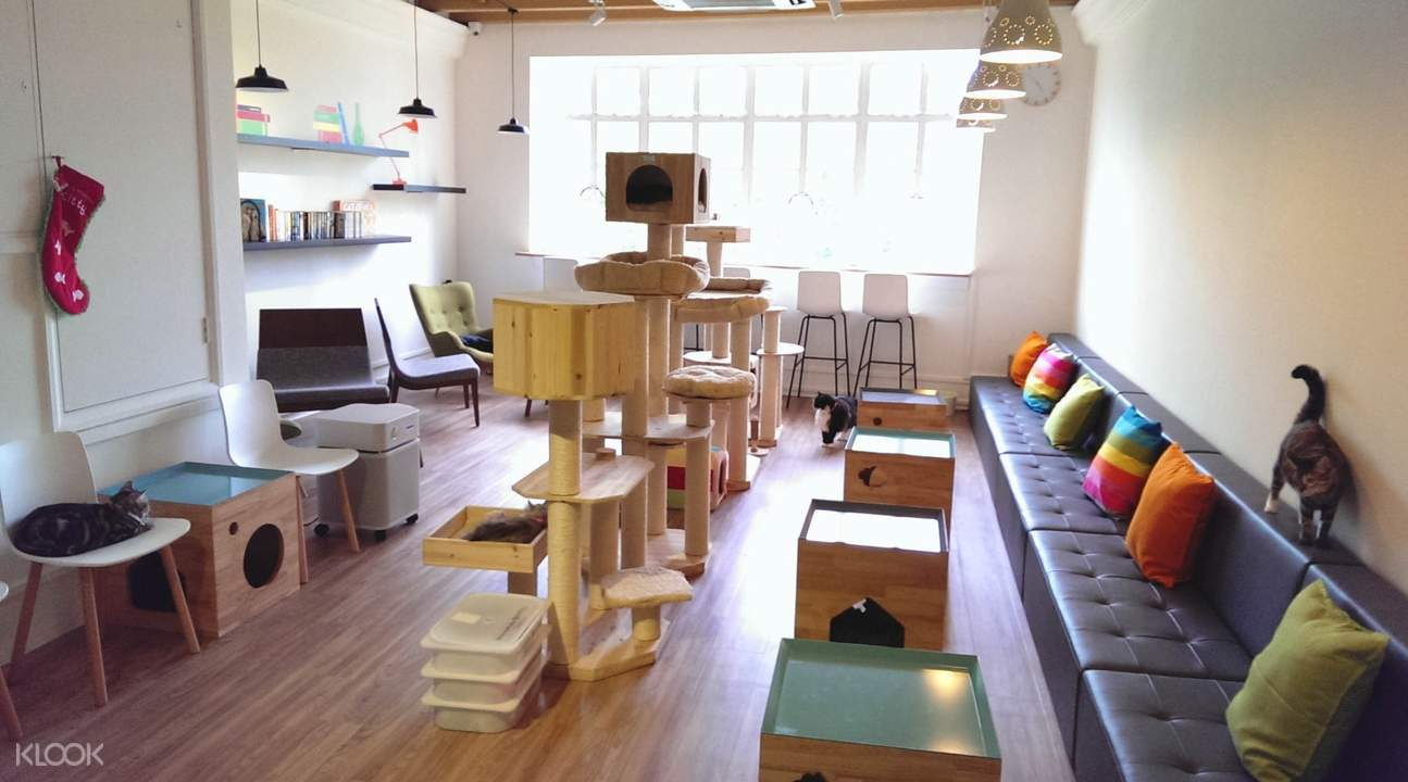 cat cafe neko no niwa admission