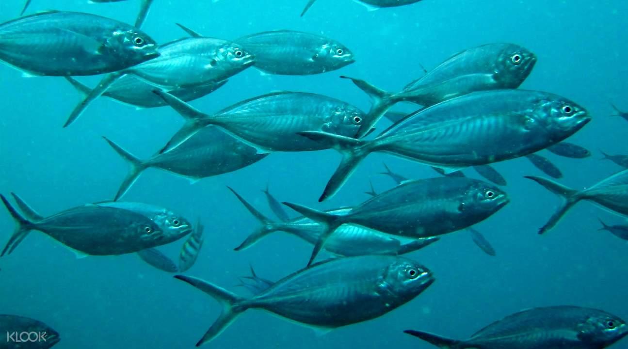PADI Diving Courses in Koh Samui