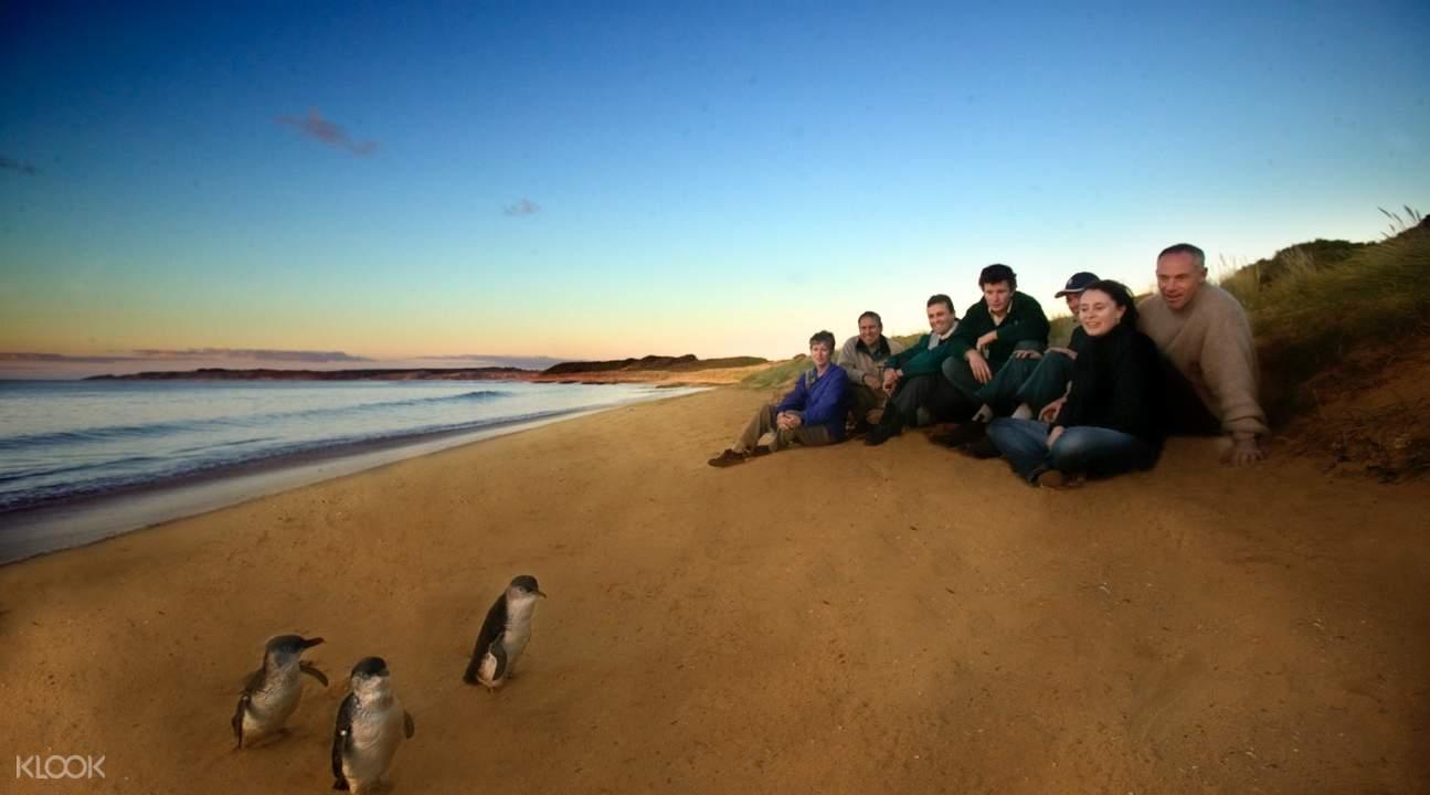 Penguin Parade Premium Viewing Experience