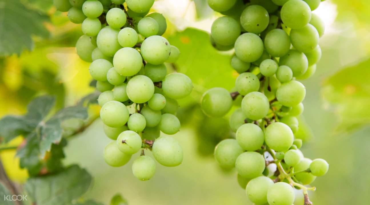 Khao Yai Winery Tour