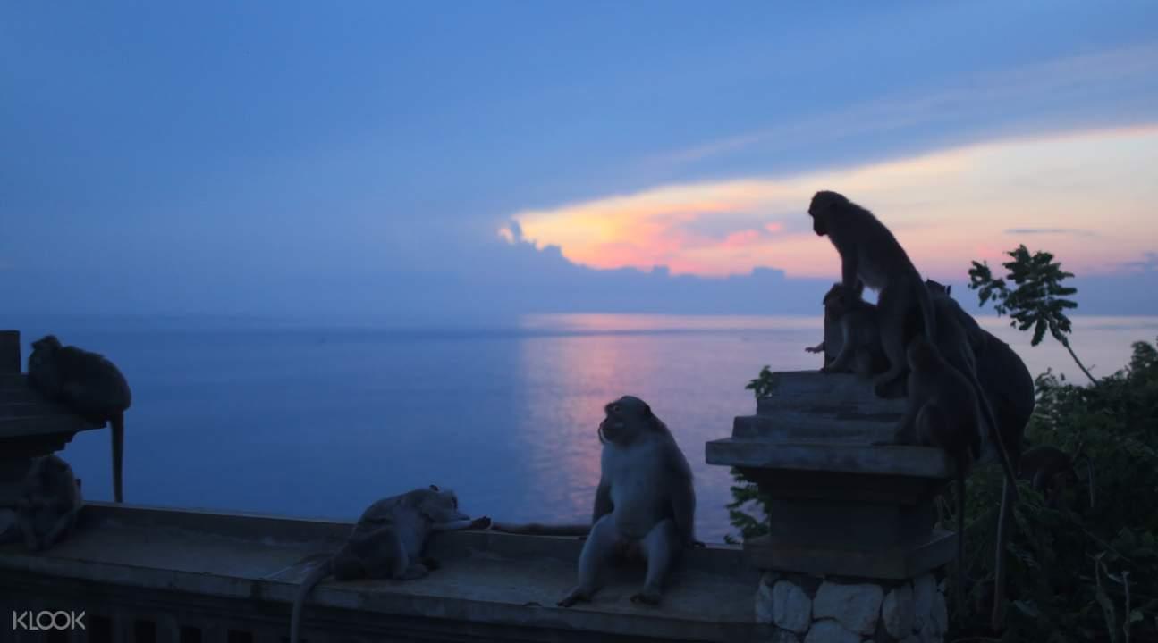 猴子在廟裡