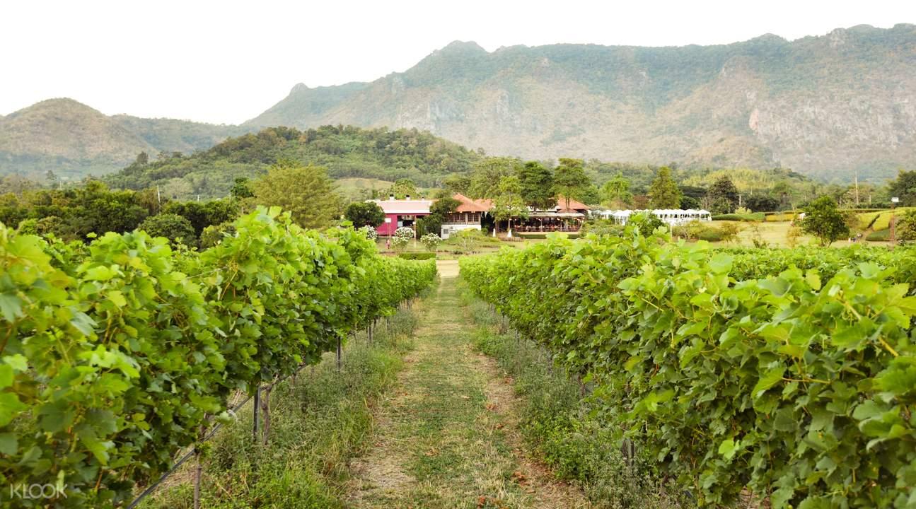 [Chia sẻ] Khám phá du lịch Vườn nho Khao Yai, PB Valley Khao Yai Winery, Nakhon Ratchasima, Thái Lan