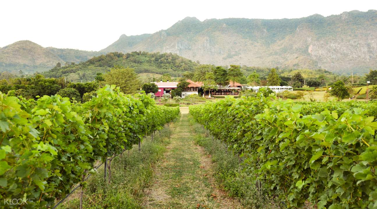 Khao Yai vineyards