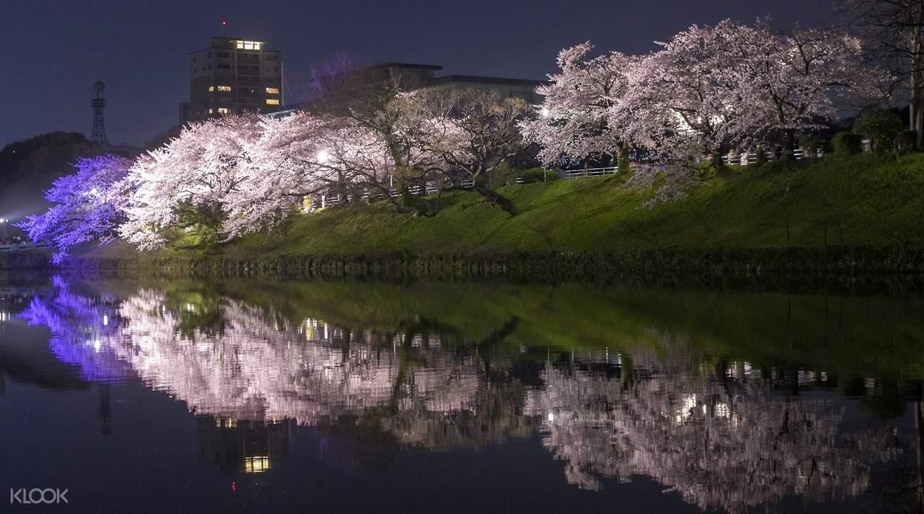福冈舞鹤公园夜樱