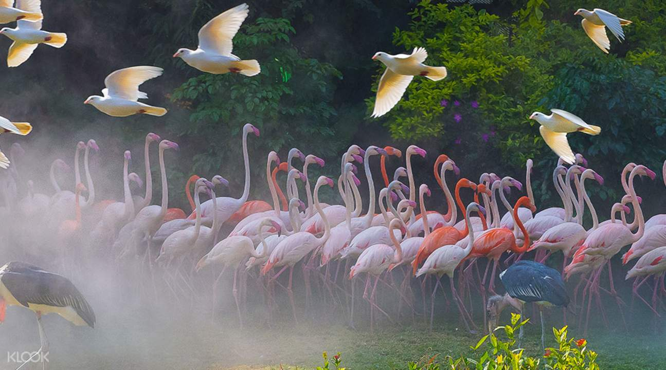 长隆飞鸟乐园广州