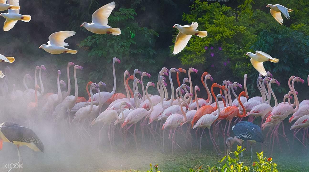 flamingos at chimelong bird park