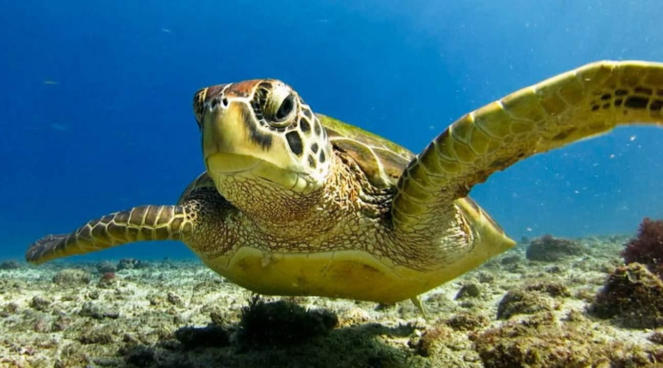 pingtung scuba diving